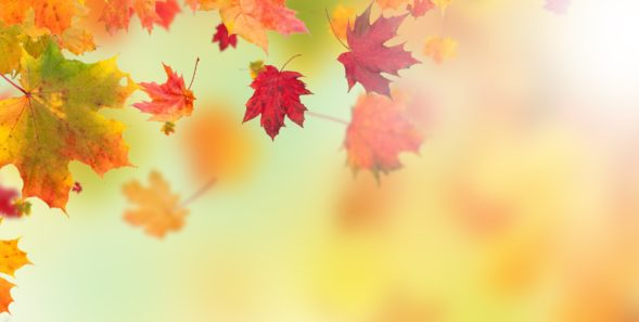 Colored autumn leaves